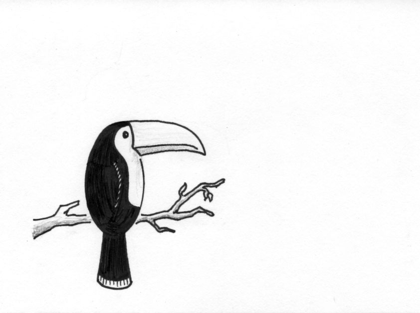Toucan Bird Drawing The toucan is one